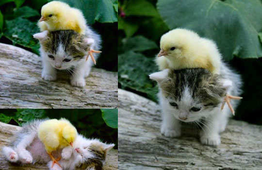 animal-friendship-10