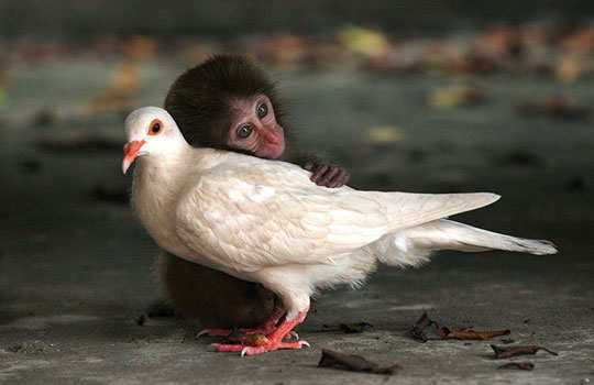 animal-friendship-1