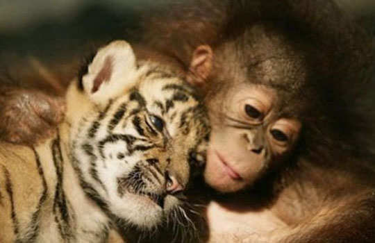 animal-friendship-4