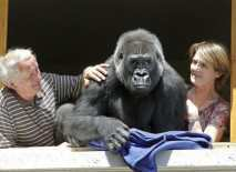 french-couple-with-adopted-female-gorilla