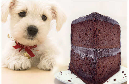 What--your--dog--should--not-choclate