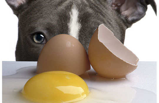 What--your--dog--should--not--eat-raw-eggs