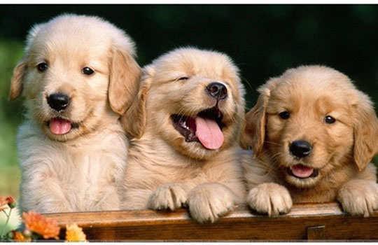 amazing-dog-facts-2
