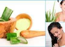 Aloe-Vera-ayurvedic-herb