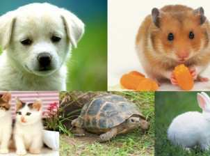 zodiac sign pets
