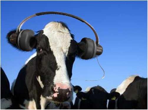 cow-with-headphones