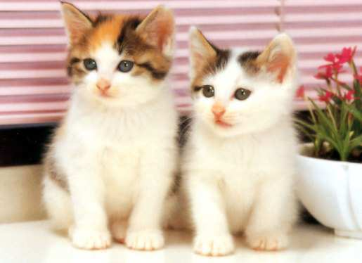 cute-white-cat