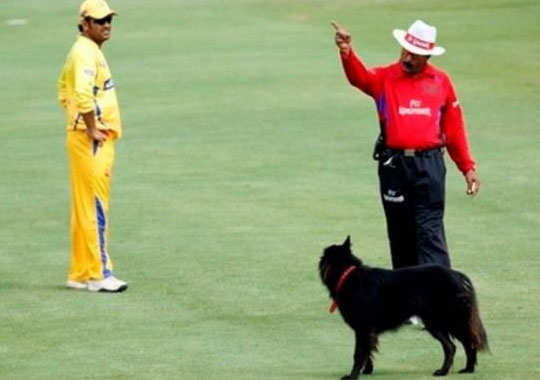 funny-pics-from-cricket-pitch-5