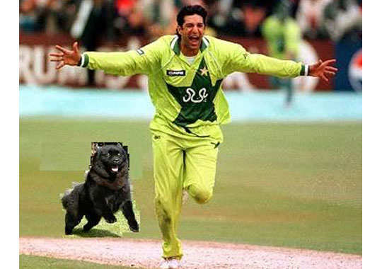 funny-pics-from-cricket-pitch-8