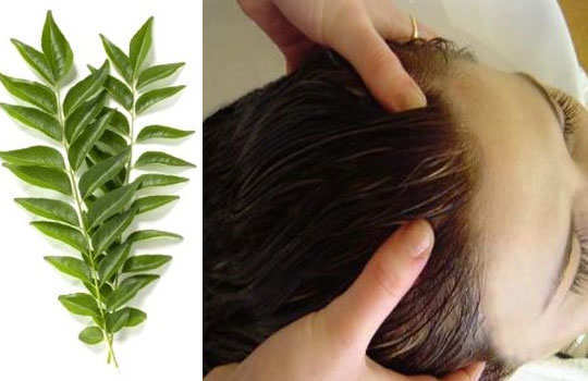 herbal-remedy-for-gray-hair-curry-leaves