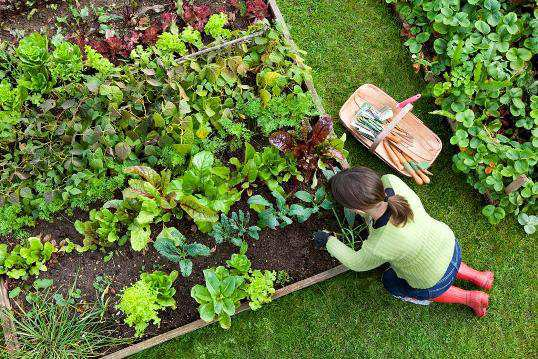 woman-work-in-garden
