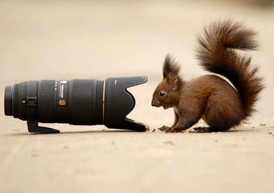 25-breathtaking-pictures-of-wild-life-17