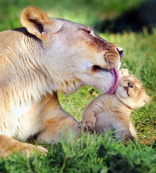 25-breathtaking-pictures-of-wild-life-23