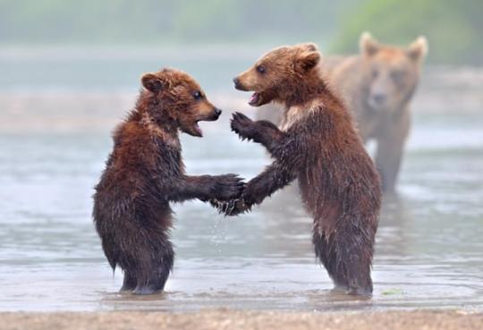 breathtaking-wildlife-pictures-13
