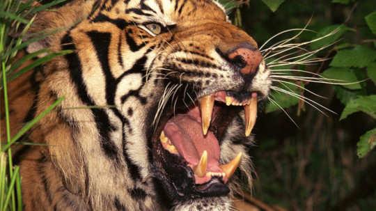 breathtaking-wildlife-pictures-2