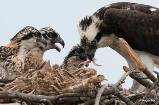 breathtaking-wildlife-pictures-22
