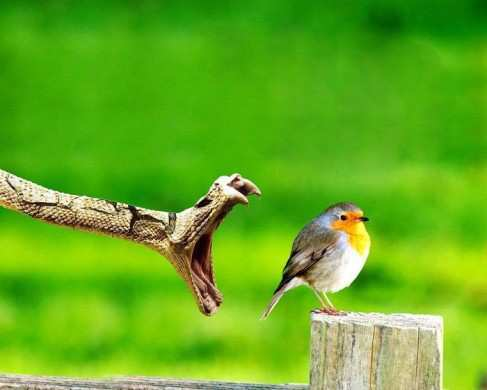 breathtaking-wildlife-pictures-3