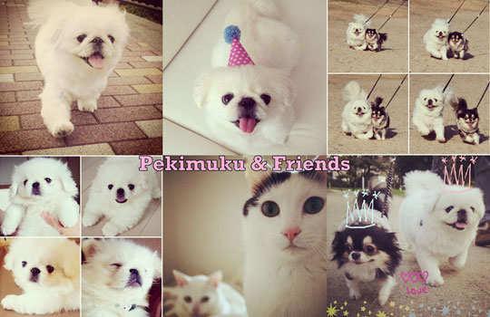 cutest-instagram-acounts-7