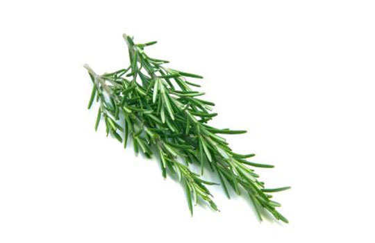 home-remedies-for-fleas-rosemary-leaves