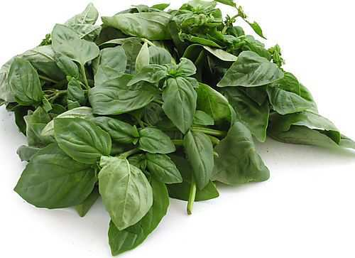 acidity-home-remedies-basil-leaves