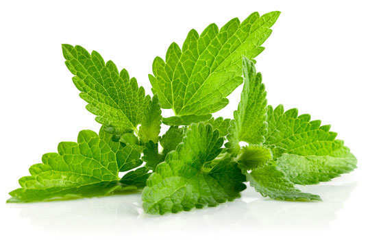 bad-breath-home-remedies-mint-leaves