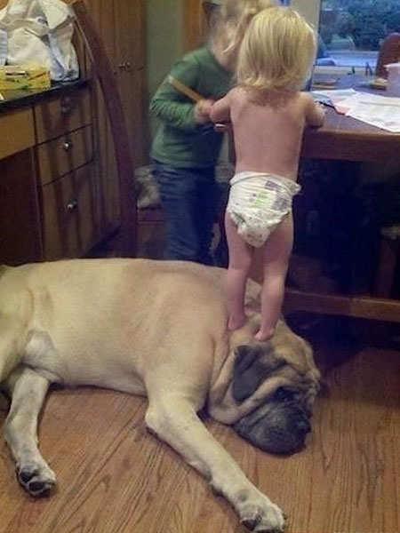 biggest-dogs-15