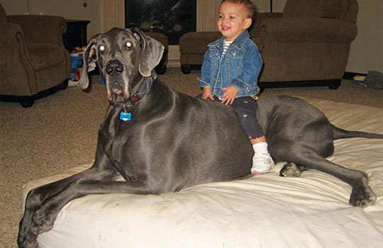 biggest-dogs-7