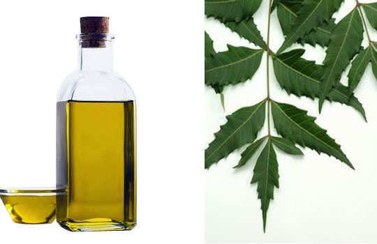 cockroaches-home-remedies-neem-oil