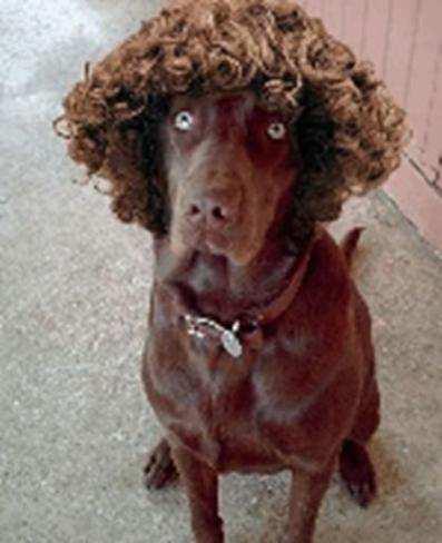 curly-hair-problem-14
