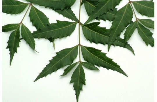 heat-rashes-home-remedies-neem-leaves