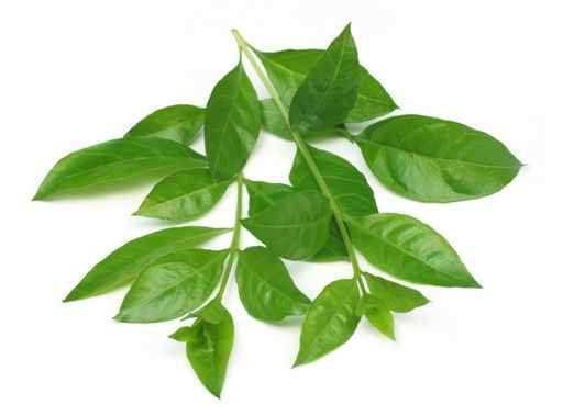 heena-leaves