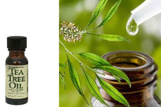 tea-tree-oil-uti