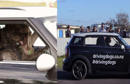 world's-first-driving-dog-2