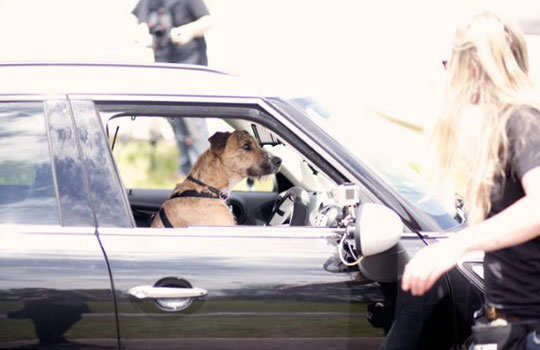 world's-first-driving-dog-4