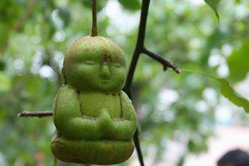 BuddhaPear