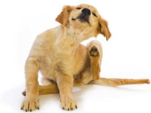 dog-skin-problem