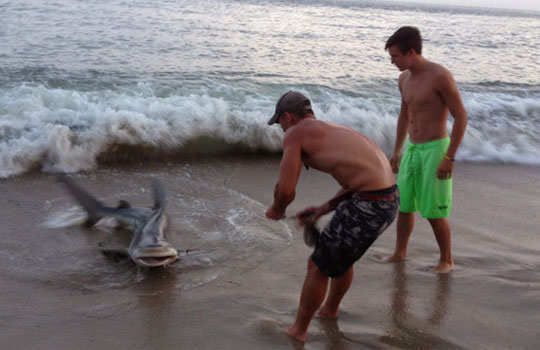 elliot-sudal-wrestling-with-shark-1