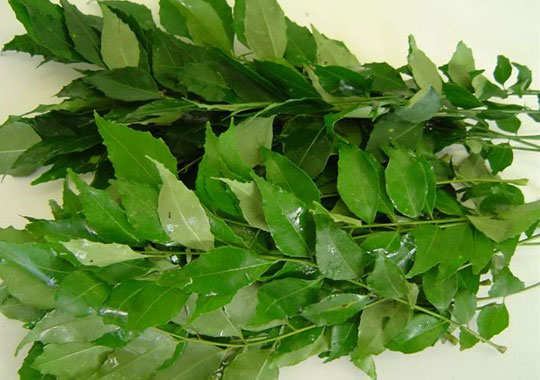 morning-sickness-home-remedies-curry-leaves