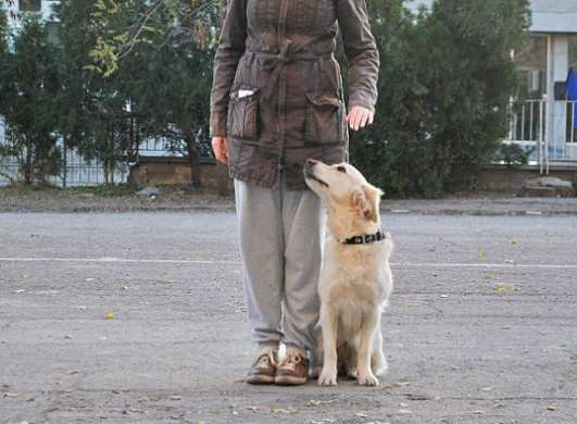 Apprenticeship-with-a-Dog-Trainer