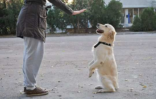 Attend-Dog-Training-Classes