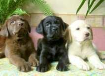 Dog-Breeds