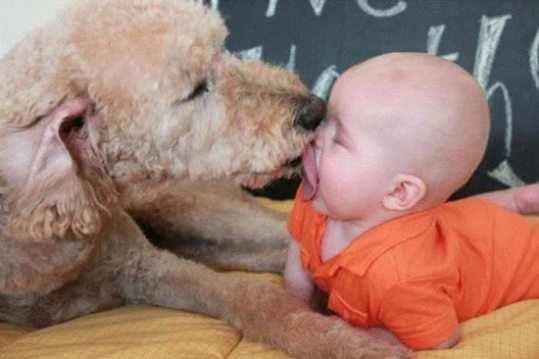 Dog-Licking-Baby