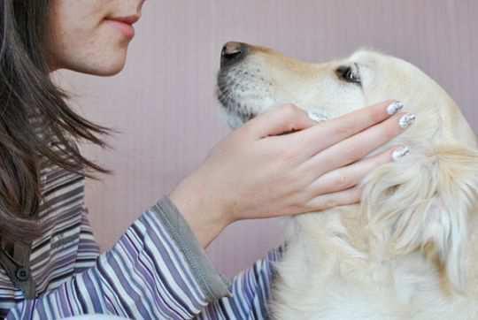 Dog-Trainer-Step-1