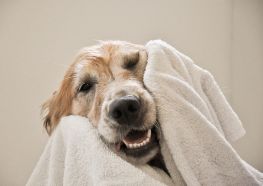 11 Home Remedies To Treat Dog Acne