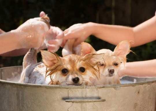 dog-intub
