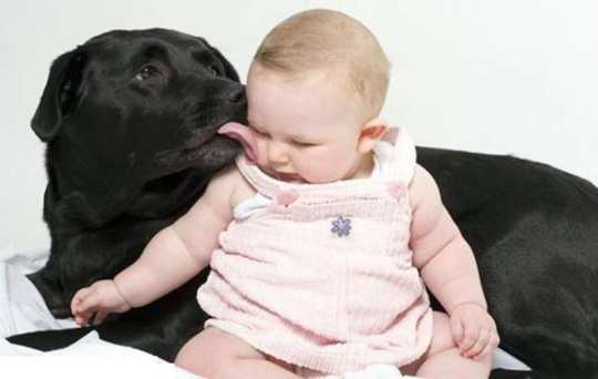 dog-kissing-baby