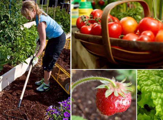 gardening-tips-5