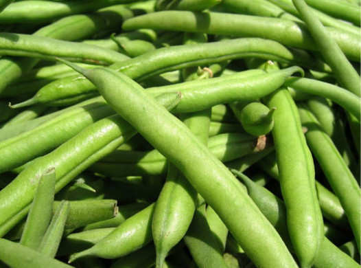 human-foods-that-dog-can-green-beans