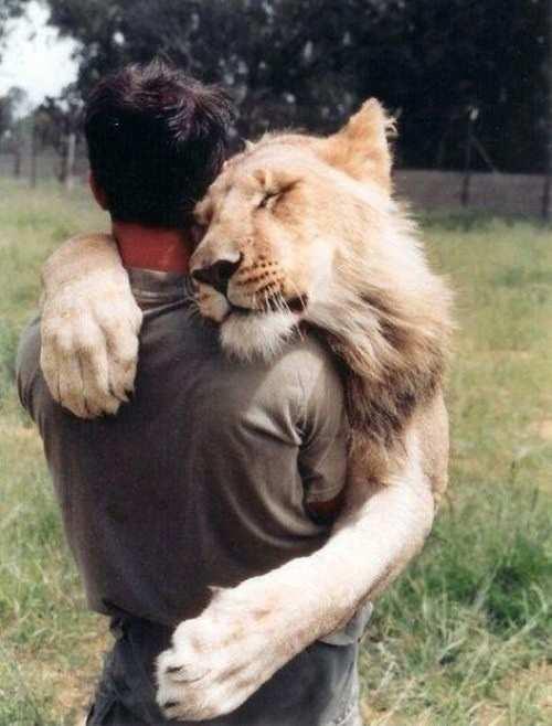 lion-hug-man