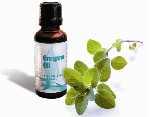 oregano-oil